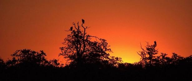 Africa Wild (Poem)